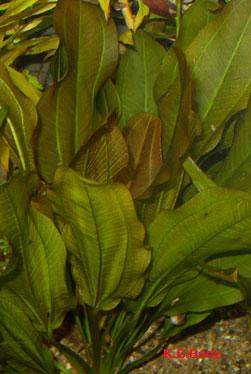 Aquarienpflanzen zierfische f r einsteiger for Kleine zierfische