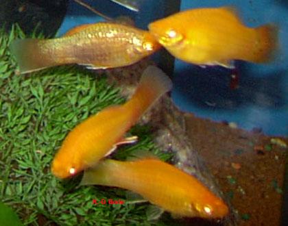 Molly Fisch Gelb ~ Die neuesten Innenarchitekturideen